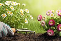 Planting Carlos Martin Landscape Design